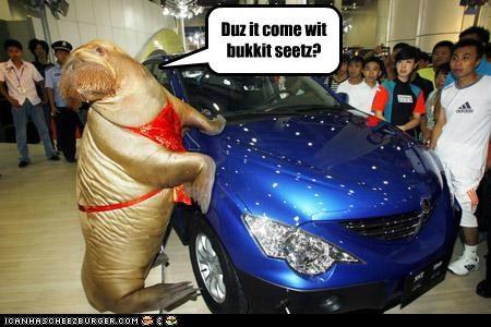 bucket bucket seats bukkit car important lolrus walrus - 5298313216