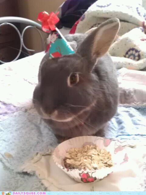 birthday bunny cake celebration happy bunday hat hats Party rabbit reader squees - 5298677504