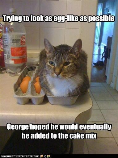 George hoped he would eventually be added to the cake mix Trying to look as egg-like as possible