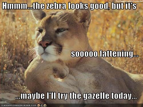 diet food lions lolcats thinking wildcats - 529888000