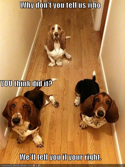 bassett hound,bassett hounds,best of the week,correct,Hall of Fame,right,what happened,what,who did it