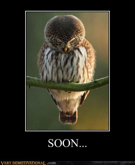 animals,creepy,hilarious,Owl,SOON