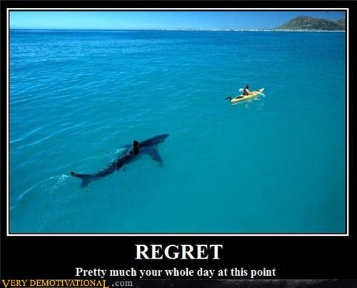 hilarious kayak regret shark