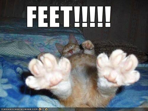 best of the week caption captioned cat feet Hall of Fame lolwut shouting showing