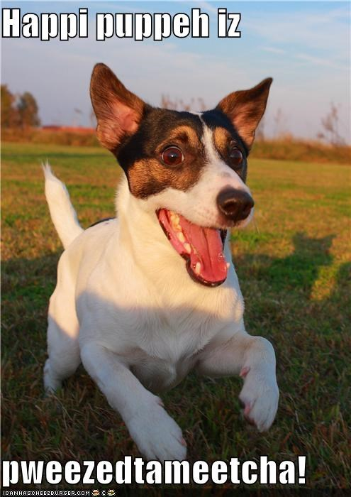 adorbz cute dog happy happy dog jack russell terrier pleased to meet you rat terrier smile smiles smiling whatbreed