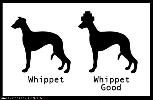 awesome crack that whip Devo song whip it whippet