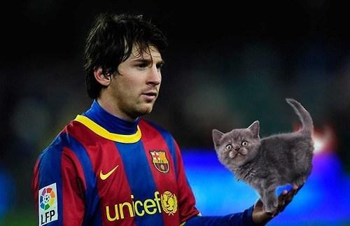 sports photoshop Cats - 52997