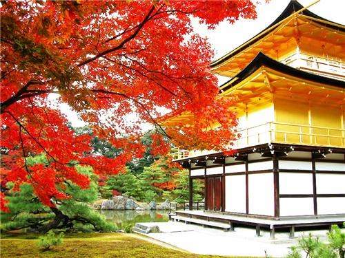 architecture,autumn,destination of the week,getaways,Japan,leaves,red,trees,vivid colors