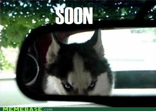 animemes backseat dogs driver husky SOON - 5301219328