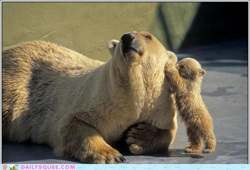 baby bear bears clever cub devious Hall of Fame lying mother plan polar bear polar bears proactive secret trick whispering - 5301321984