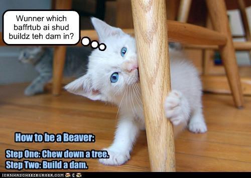 Step One: Chew down a tree. Step Two: Build a dam. How to be a Beaver: Wunner which baffrtub ai shud buildz teh dam in?