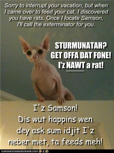 Sorry to interrupt your vacation, but when I came over to feed your cat, I discovered you have rats. Once I locate Samson, I'll call the exterminator for you. STURMUNATAH? GET OFFA DAT FONE! I'z NAWT a rat! I'z Samson! Dis wut happins wen dey ask sum idjit I'z neber met, ta feeds meh! ____