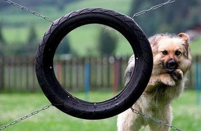 dogs tasks dumb everyday - 5303301