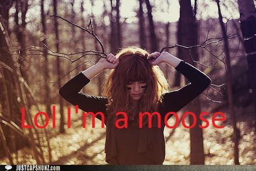 animals branches idiots impressions moose trees - 5303643136