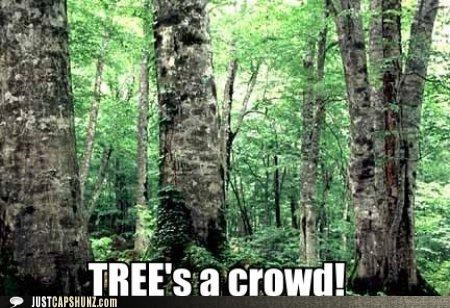 crowd,forests,puns,sayings,threes-a-crowd,trees