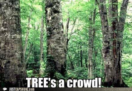 crowd puns sayings trees - 5303720960