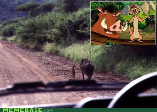 bff IRL timon and pumba - 5304092928