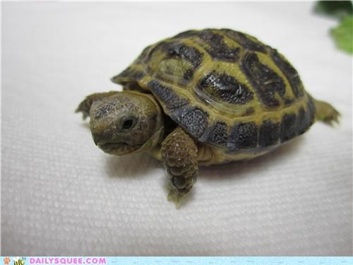 baby,bath,Hall of Fame,noms,reader squees,ready,TIL,tortoise,waiting