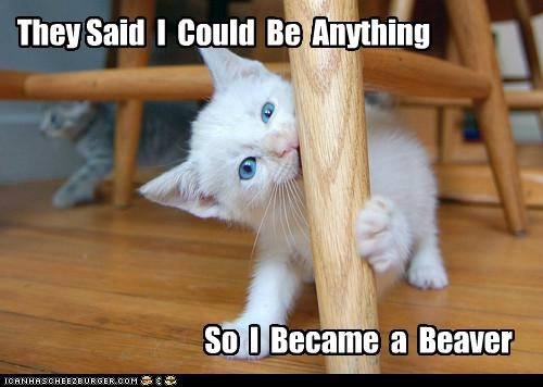 anything be beaver became could kitten meme said - 5305223168
