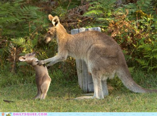acting like animals,baby,boxer,comparison,Joey,kangaroo,kangaroos,lecture,mother,Muhammad Ali,scolding,truth