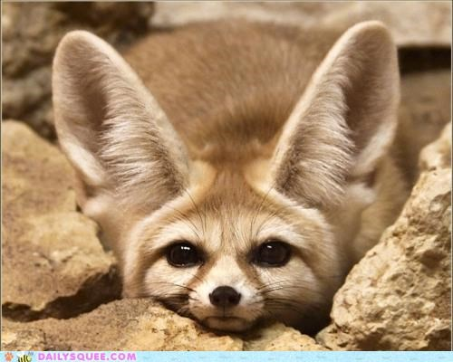 explanation fennec fennec fox fox Hall of Fame hiding peeking rhyme rocks self referential title - 5305350144