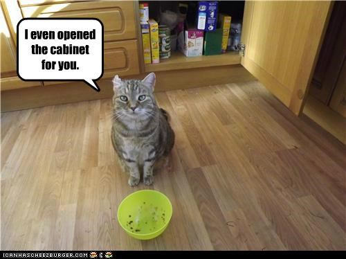 accommodating cabinet caption captioned cat do want even noms opened trying waiting - 5305490176