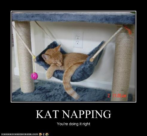 KAT NAPPING You're doing it right