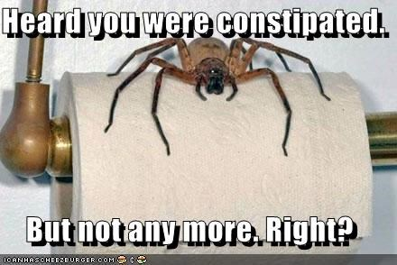 arachnophobia bathroom best of the week constipated constipation do not want go away gross Hall of Fame omg spider toilet paper wtf yuck - 5305754368
