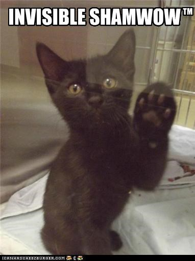 caption captioned cat invisible kitten Shamwow wiping - 5305900288