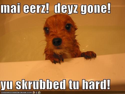 bath bath time ears water wet whatbreed - 5306098688