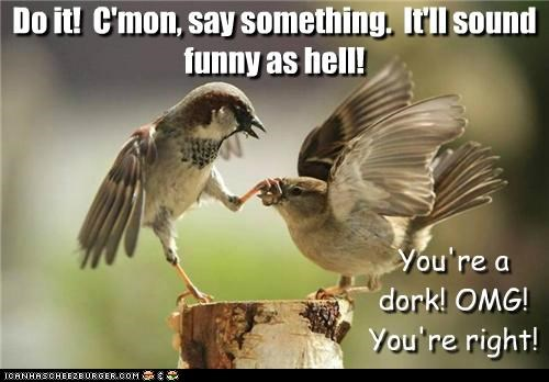 Do it! C'mon, say something. It'll sound funny as hell! You're a dork! OMG! You're right!