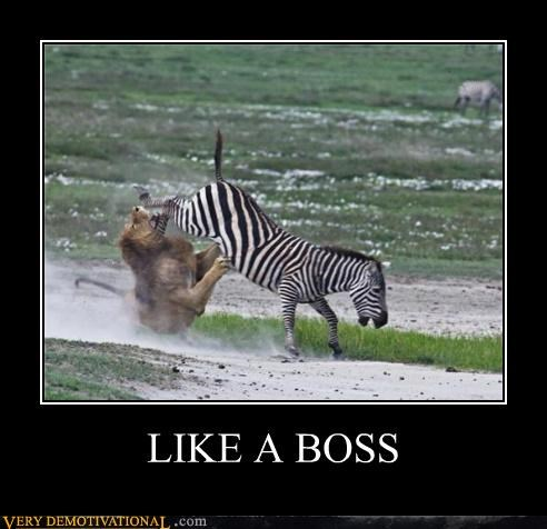 Like a Boss,lion,Pure Awesome,zebra