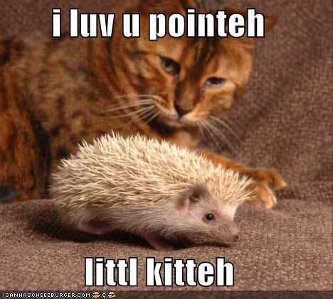 best of the week caption captioned cat Hall of Fame hedgehog i love you kitten little love misinterpretation pointy tabby - 5307946240