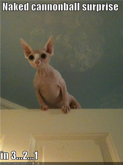 cannonball caption captioned cat countdown naked sphynx surprise - 5308042496