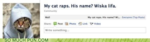 cat,lolwut,rap,rapper,rapping,similar sounding,whiskers,wiz khalifa