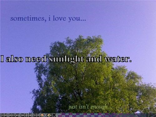 I also need sunlight and water.