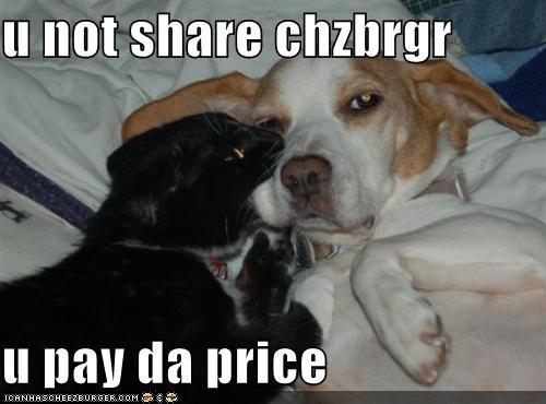 Cheezburger Image 5308973824