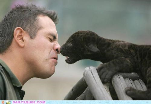 accident acting like animals baby boop booping broken cub game Hall of Fame human injury nose oops panther playing too hard - 5309067008