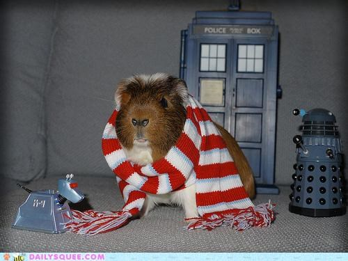 acting like animals become dalek daleks doctor who dream dream come true goal guinea pig Hall of Fame noms pretending pun scarf tardis - 5309080064