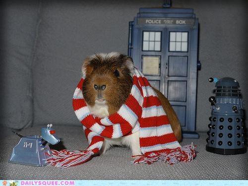 acting like animals become dalek daleks doctor who dream dream come true goal guinea pig Hall of Fame noms pretending pun scarf tardis - 5309080064