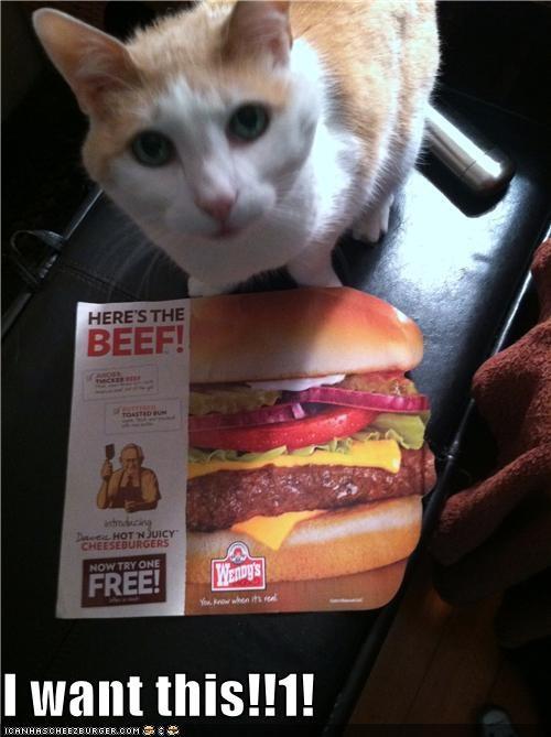 Cheezburger Image 5309146368