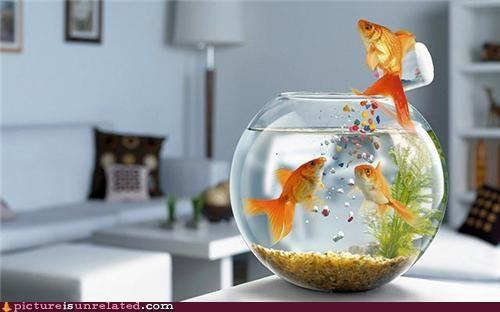 bowl fish food wtf - 5309179904