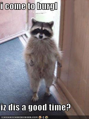 burglars,crime,natures-bandit,raccoons