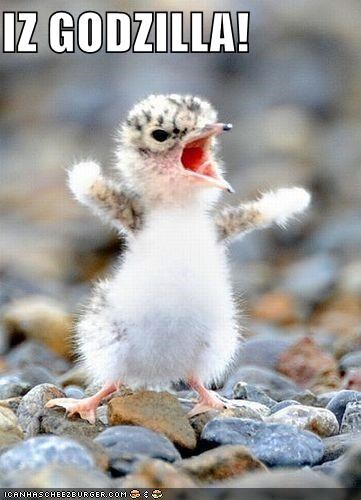 am baby bird caption captioned chick fierce godzilla I imitating imitation roar roaring shouting - 5309487616