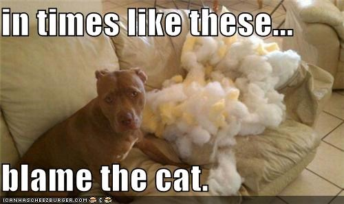 best of the week blame blame the cat cat destruction Hall of Fame mess oops pit bull pitbull - 5309534208