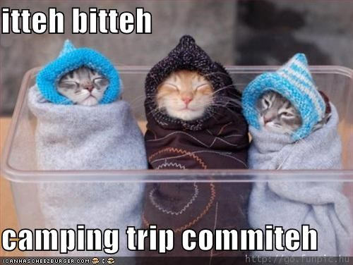 best of the week,bundles,camping,caption,captioned,cat,Cats,Hall of Fame,itteh bitteh kitteh committeh,kitten,sleeping,sleeping bags,snug,trip,warm,wrapped up