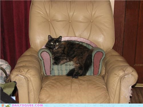 accessory cat couch Inception lolwut pastiche queen reader squees sitting throne