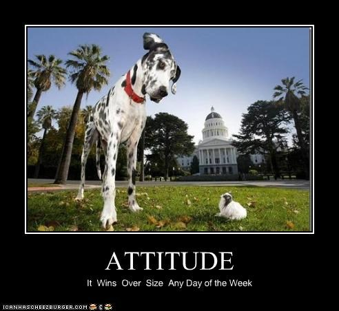ATTITUDE It Wins Over Size Any Day of the Week