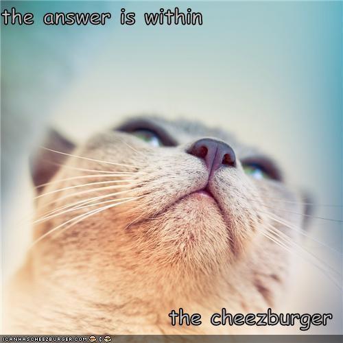 Cheezburger Image 5309966592