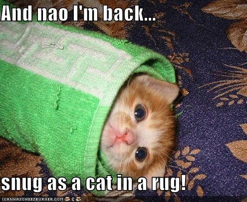 nao I'm back... snug as a cat in a rug